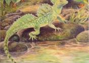 lizard-jpg